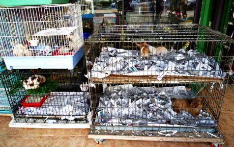 Shkodra: Tierhandlung