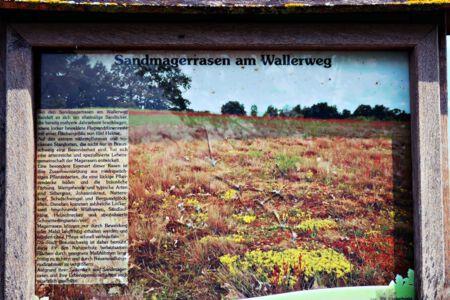 Sandmagerrasen am Wallerweg