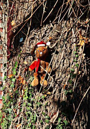 Teddy am Baum