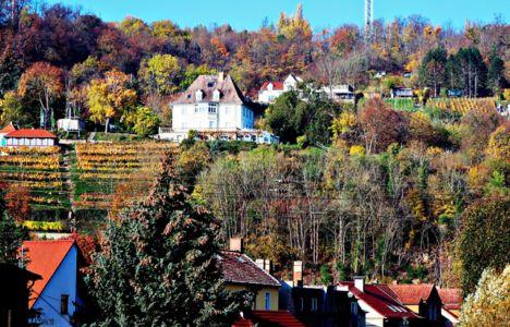 "Landesweingut ""Kloster Pforta"""