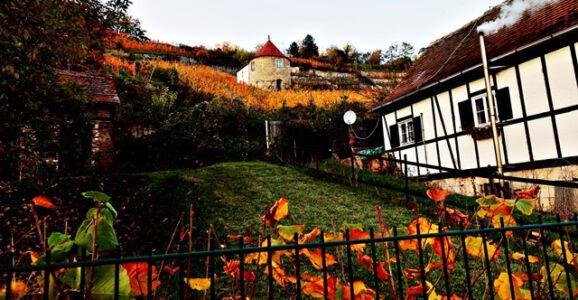 Am Saale-Wein-Wanderweg