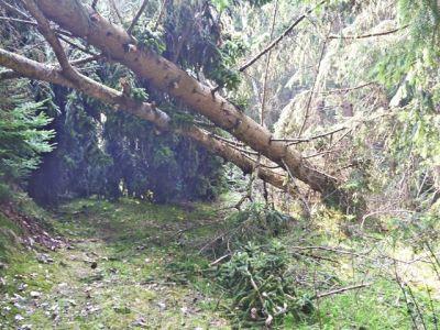 Baum kreuzt Wanderweg