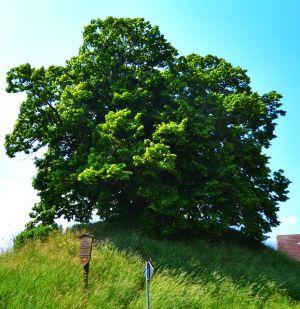 Der Tumulus von Evessen