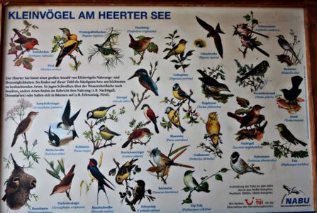 Kleinvögel am Heerter See