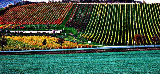 Die Weinberge von Bad Kösen