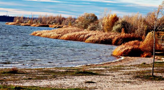 Am Ufer des Geiseltalsees