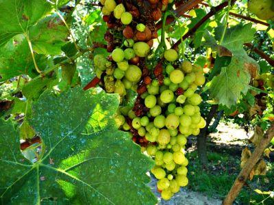Weingut in Tirana