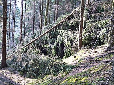 Weg von Birnbaumteich zum Hellergrund