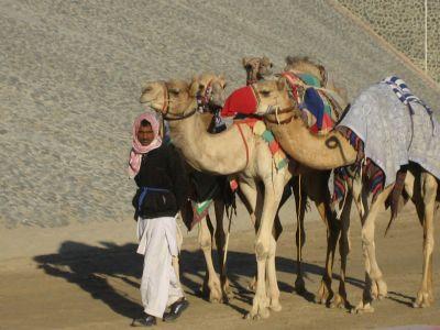 Kamelbetreuer