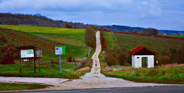 Weinlage am Himmelreich