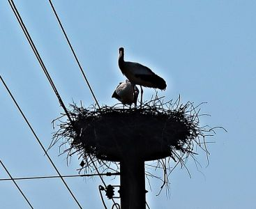 Storchennest in Oebisfelde