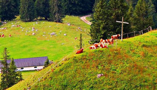 Kühe am Kreuz