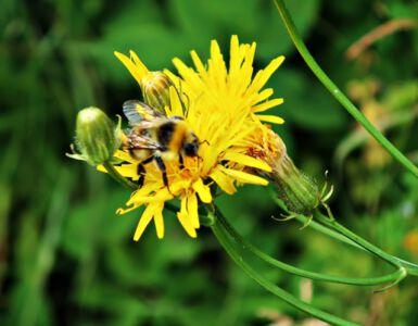 Bunte Insektenwelt am Ith