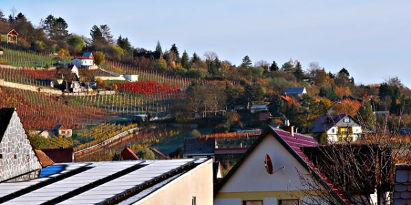 Weinbau bei Freyburg