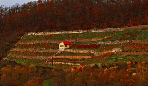 Weinhäuschen im Weinberg Kaatschen