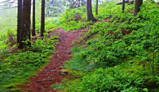 Der Weg zur Schutzhütte