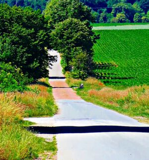 Waldweg am Glockenberg