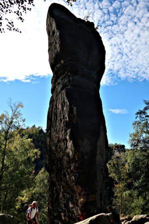 Riese im Nationalpark