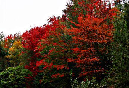Farbenspiel im WeltWald Harz