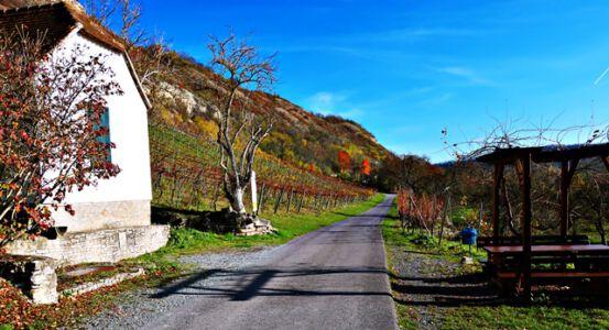 Auf dem Wein-Radweg