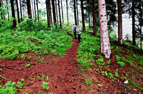 Zurück zum Forstweg