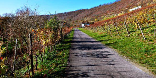 Radweg durch die Weinberge