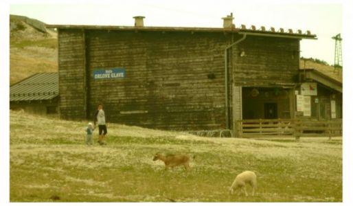 Schafsidylle an der Bergstation