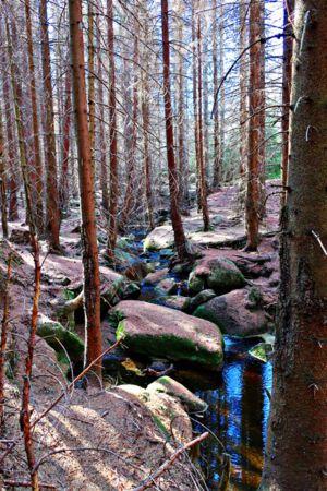 Tote Bäume, rote Nadeln