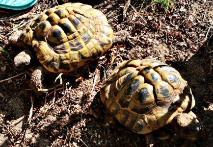 Schildkröten beim Sonnenbad