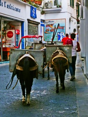 Amalfi: Tiertransport