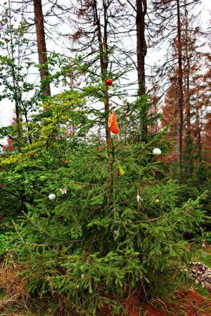 Weihnachtsbaum am Großen Knollen