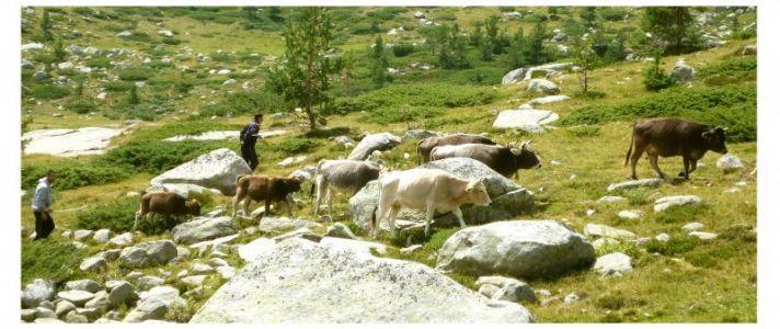 Pirin-Gebirge