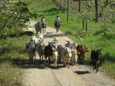 Costa Rica: Cowboys