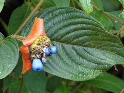 Costa Rica: Pflanze