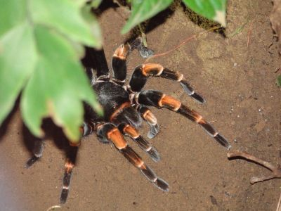 Costa Rica: Tierwelt