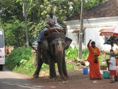 Elefant am Weg