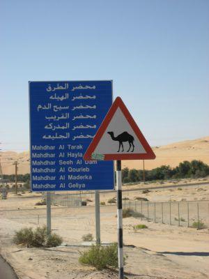 Kamelschild