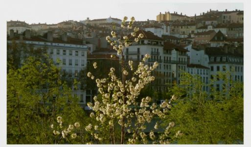 Blick auf die Altstadt von der Presq'ile