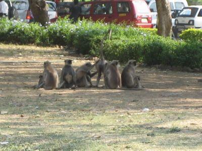 Aurangabad: Affen