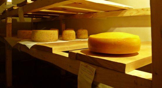 Perechyn: Besuch einer Käsefabrik