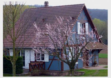 Rosheim: Liebevolle Bauten