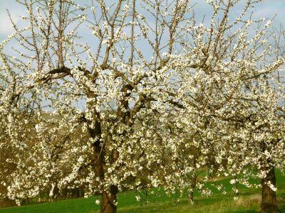 Rosheim: Auf der Wanderung begnet uns der Frühling