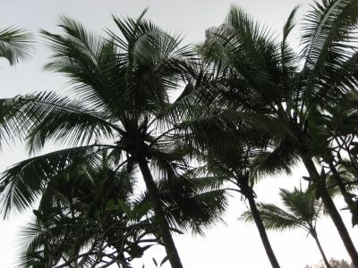 Startbild_palms