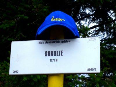 Tagvier_Sokolie