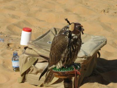 Die Moreeb-Düne: Ein besonderer Ort in der Rub al Khali