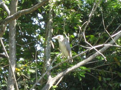 Costa Rica: Vögel