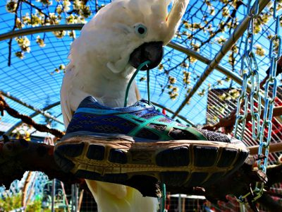 Corona-diary: Marli and the keen hiker's shoe