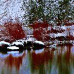 Schneeimpressionen im Inselwall-Park