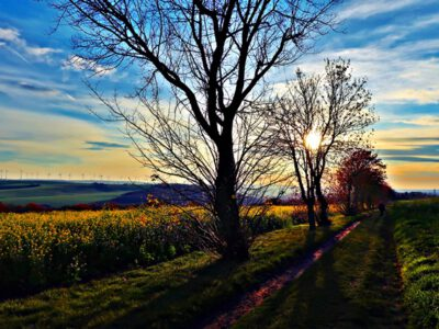 Corona diary: the terrassed vineyard of Kaatschen