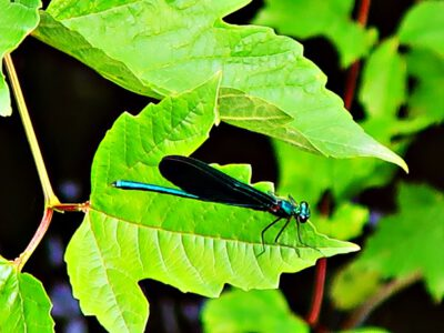 A dragonfly dream at Wahrenholz-Nord